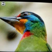 台湾野鳥撮影旅の5日目