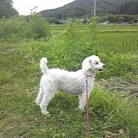 曇りのち雨(夏至)