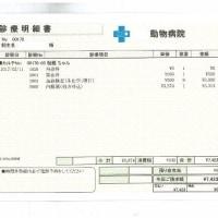 伽羅の肝炎&脳卒中日記(18)