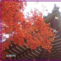 晩秋の京都 ・紅葉の名所6ヶ所巡り