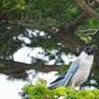 鳴き声がうるさい鳥