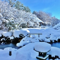 新年会と京都退蔵院の庭園