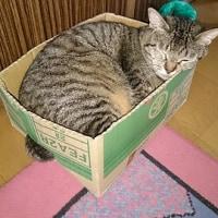 これは、箱がかわいそうだ。