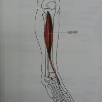 足がつる それも前! 後半規管を鍛える 痛みなくなる。