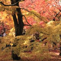 赤とオレンジに染まる東福寺