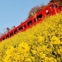観光列車「伊予灘ものがたり」と菜の花のコラボ(伊予市双海町)