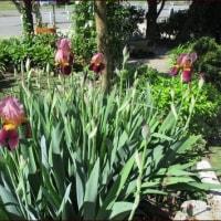 移りゆく季節に咲く花たち