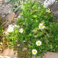 庭いじりから癒しをもらっています。