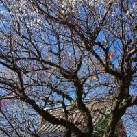 鹿沼市 天満宮例大祭 29.2.19