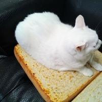 パンの使い方ニャう。