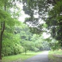 アジサイの穴場発見!その名は芹沢公園