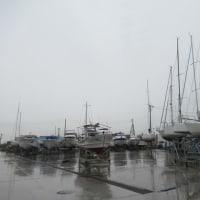 今日は雨です!