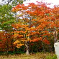 リベンジ・中禅寺湖南岸コースを完歩
