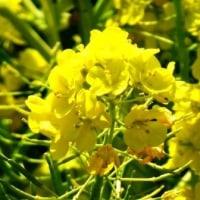 道に咲く春の花の写真