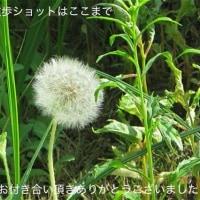6/2ぷらっと散策3最終弾
