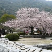 桜の下で会いましょう。
