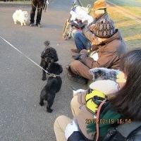 二月十九日の公園-はじめまして、チャチャ君(シュナ)