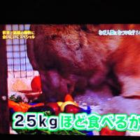 2/26 1日25キロも食べる24歳 人だと60くらい