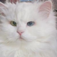 我が家の猫:永眠