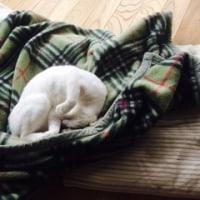 ふかふか毛布