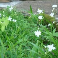 お花の種まき