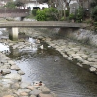 山口県下関市長府「壇具川」辺りを散歩 170326