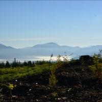 滝沢林道からの富士山と花②(回想)