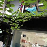 京都 cumono gallery での 森林浴「第三回メガネ」企画