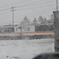 マガモ、オナガガモ、電車