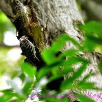 ゴールデンウィークのの野鳥たち(野鳥フォトー80)