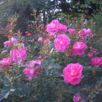 秋の彩り花まつり