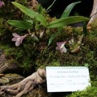 4月21日 高知県立牧野植物園