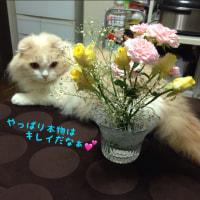 久しぶりのお花