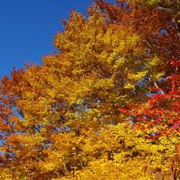 鶴間池の秋 1019