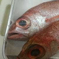 美味しい魚と肴