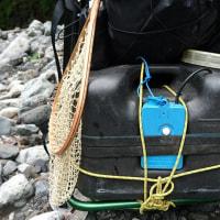 あまごの繁殖用種魚捕獲作業
