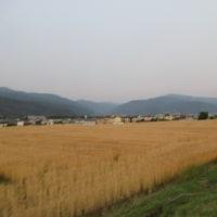 6月22日(木)夕焼けwalking