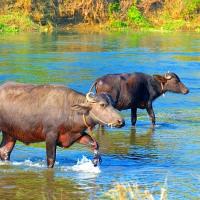 2016ネパール紀行・・・チトワン国立公園・・・カヌーライド