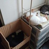 最近の我が家の猫たち