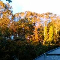 秋も深まりつつ