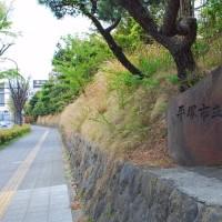 ぶらり平塚・平塚八幡宮