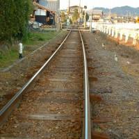 鉄道の軌道に生える草は鉄道草という名で秋季語にもなっているらしい
