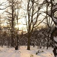 雪上ナイトハイキング、参加者募集中!