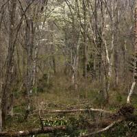 5月28日(日)  北信州へ(5) 戸隠森林植物園