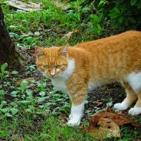 【ドキュメンタリー】猫の恋愛事情