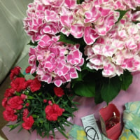 野の花・母の日