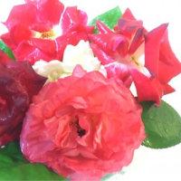きれい塾の薔薇は…(^_-)-☆