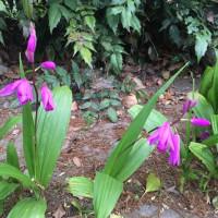 川島町の平成の森公園の薔薇はもう少し先?