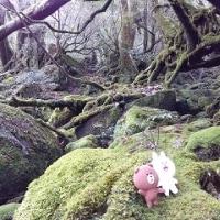 もののけ姫を探した屋久島5日間の旅 HPアップしました~動画・経費あり