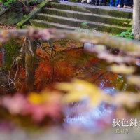 秋色鎌倉2016 今鎌倉で一番キレイかなあ 覚園寺